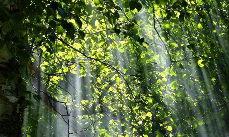 [Image: sunlight.jpg]