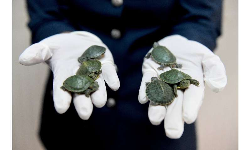 Terrapins are commonly traded but a permit is necessary to importthem into Malaysia