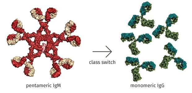TET proteins regulate factors essential for normal antibody production