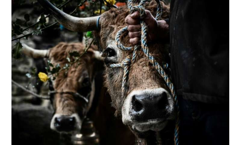 The case came to the EU court of justice after a French association promoting animal welfare in abattoirs, called for a ban on t