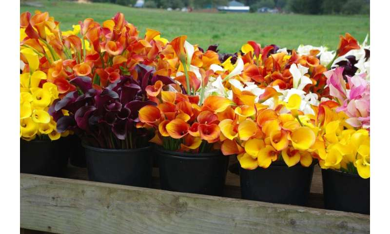 Problems of North American specialty cut flowers