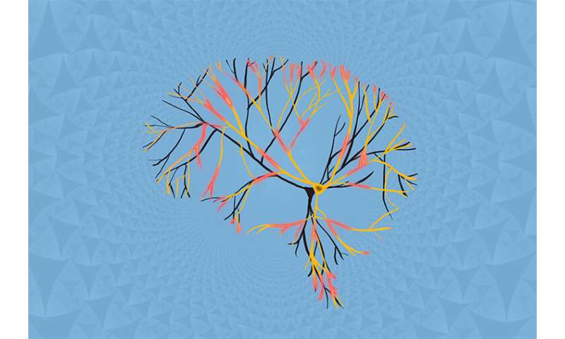 The fractal brain, from a single neuron's perspective