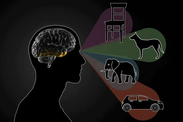 The inferotemporal cortex is key to differentiating between objects
