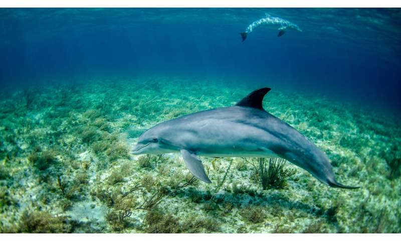 Theory that ridged skin helps dolphins debunked