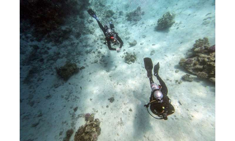 The rebound in tourism could put further pressure on Egypt's corals, according to local experts