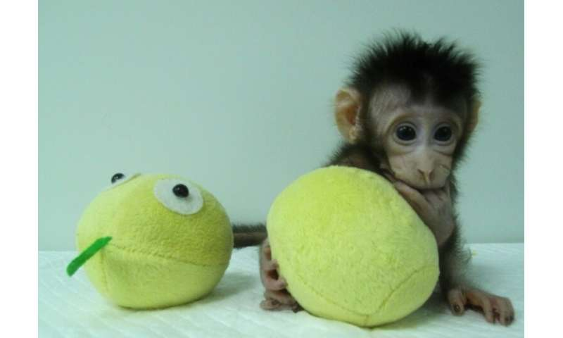 The Shanghai institute  made news in January 2018 by announcing researchers had cloned the first two monkeys using a process cal