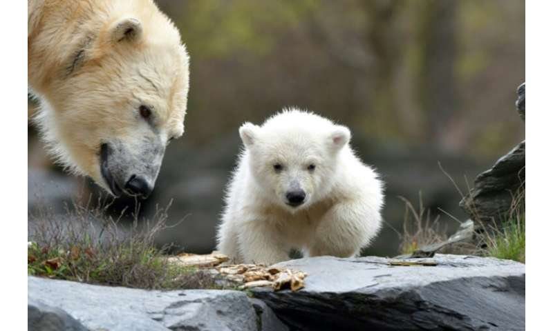 The three and a half month old polar bear still has not been named