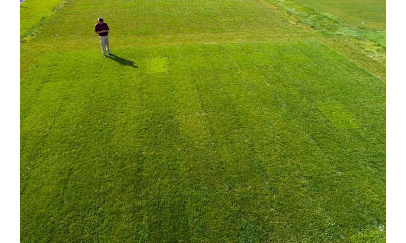 The trials of turfgrass breeders