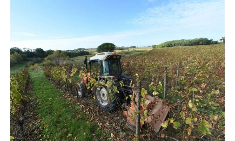 The vast majority of producers cultivating grapes across France are heavily reliant on weedkillers, including glyphosate