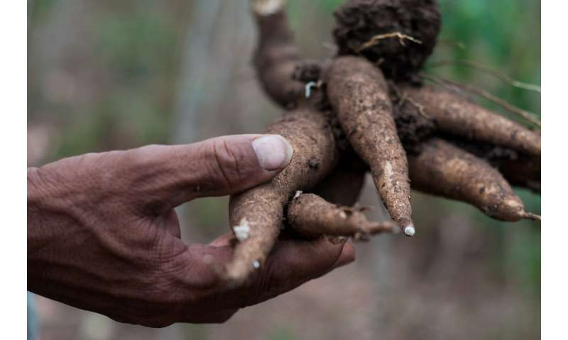 The world needs a global system to detect and halt the spread of emerging crop diseases