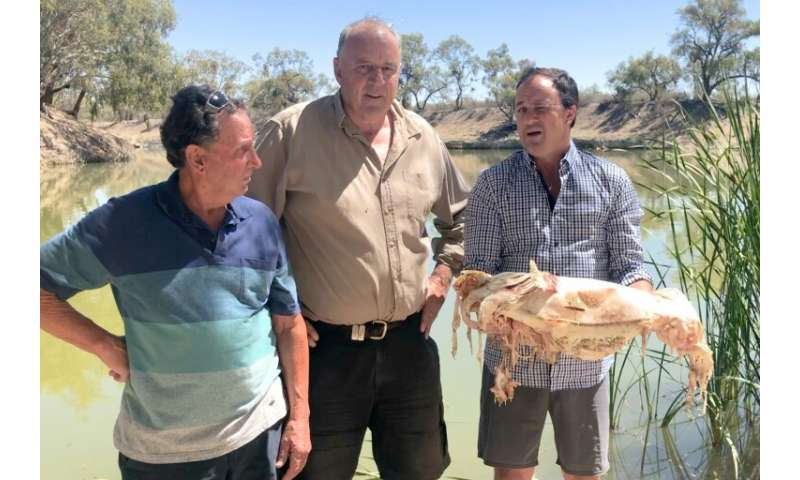 This decades-old Murray cod was among millions of fish which died in mass kills in December and January in the Darling river