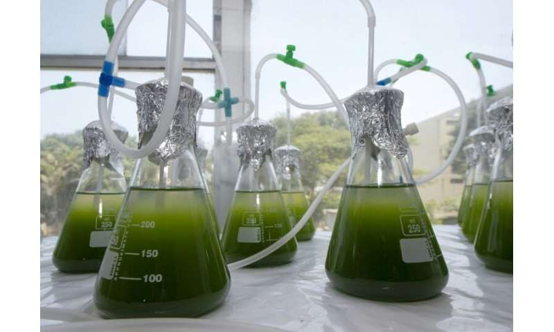 Tiny green microalgae may not look like much but they could provide the solution to depolluting lakes and rivers contaminated wi