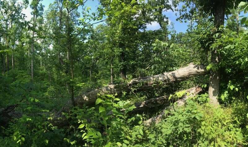 Tornadoes, windstorms pave way for lasting plant invasions