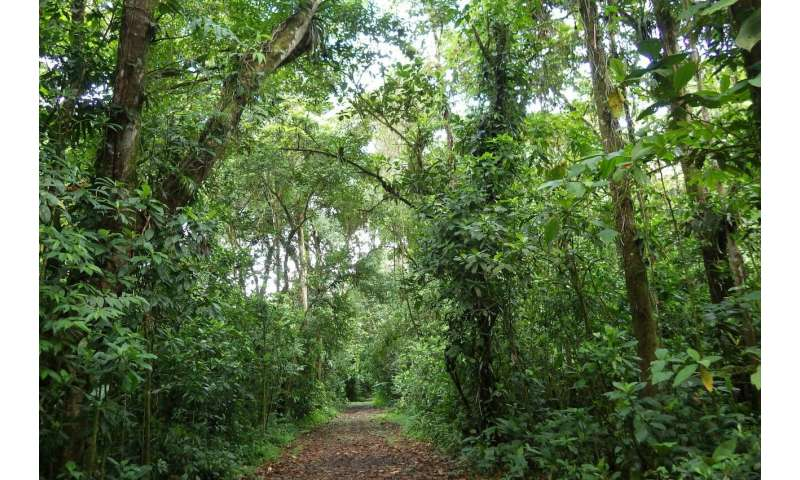 Tropical forests naturally regrow quickly, but without species variety