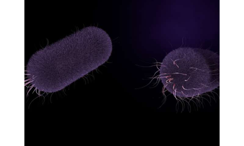 Two new, highly drug-resistant forms of bacteria that cause life-threatening typhoid fever