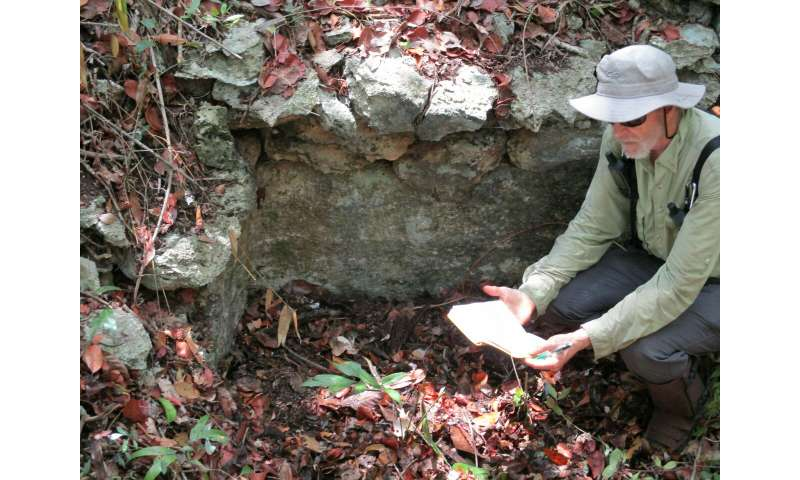UC researchers find ancient Maya farms in Mexican wetlands