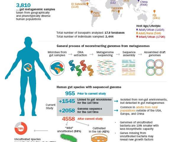 Uncovering uncultivated microbes in the human gut
