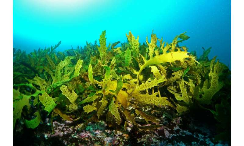 Underwater forests threatened by future climate change, new study finds