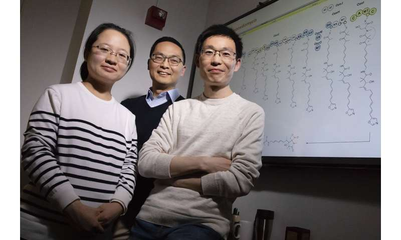 Unmuting large silent genes lets bacteria produce new molecules, potential drug candidates