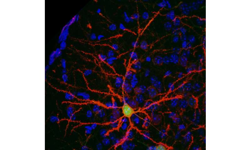 Using an anti-smoking drug to control neurons