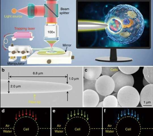 **Using a natural single-cell biomagnifier for subwavelength imaging: seeing smaller through cells
