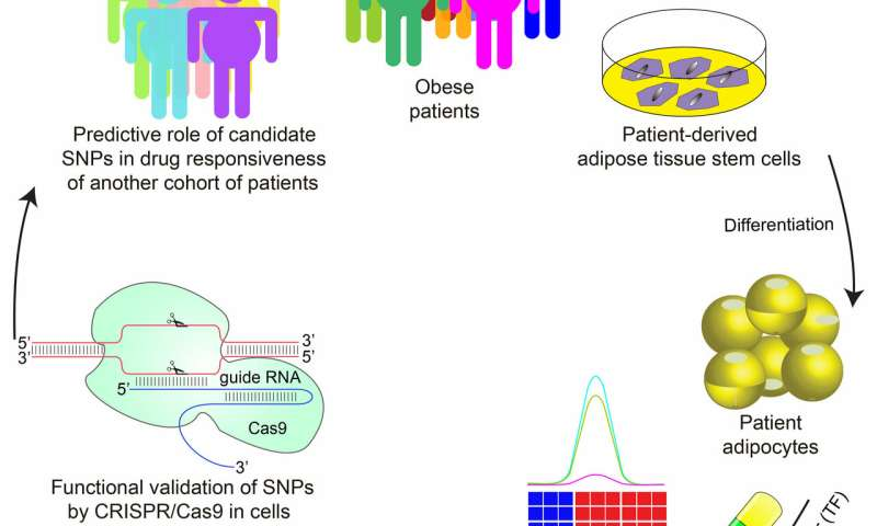 Using genetics of human fat cells to predict response to anti-diabetes drugs