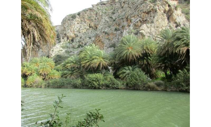 Using genomic data, NYU Abu Dhabi researchers unlock history of North African date palm