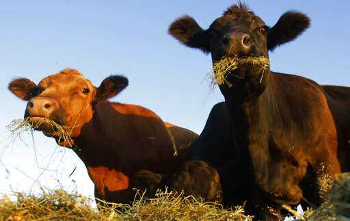 US regulators outline oversight on meat grown in lab dishes