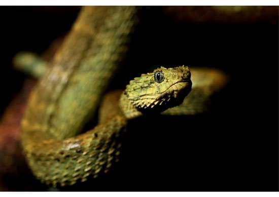 Variable venom -- why are some snakes deadlier than others?