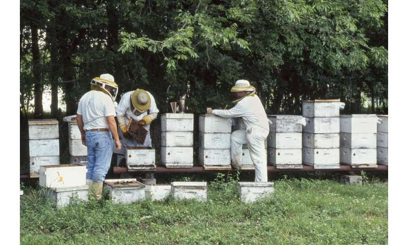Weak honey bee colonies may fail from cold exposure during shipping