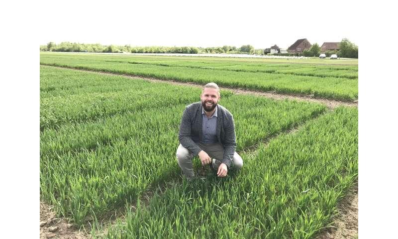 Wheat myth debunked