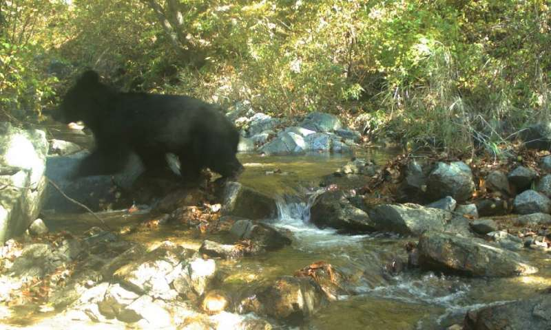 While some soldiers have reported seeing bears in the DMZ, it was the first time one had been photographed