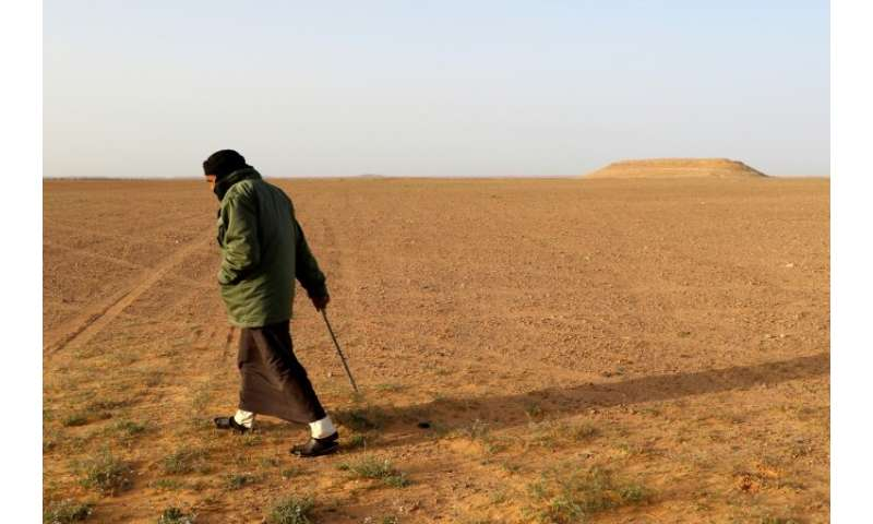 "White truffle hunters comb the desert in Libya for the fungus known locally as ""Terfas"" which grows under the sand nur"