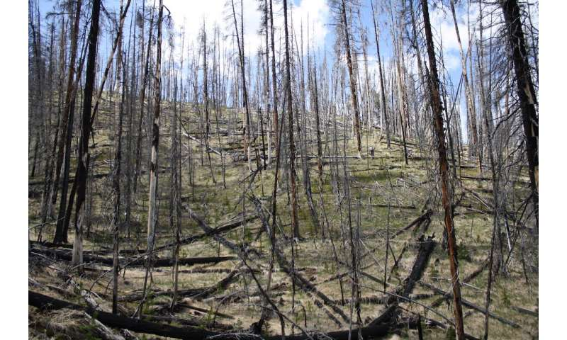 With fire, warming and drought, Yellowstone forests could be grassland by mid-century