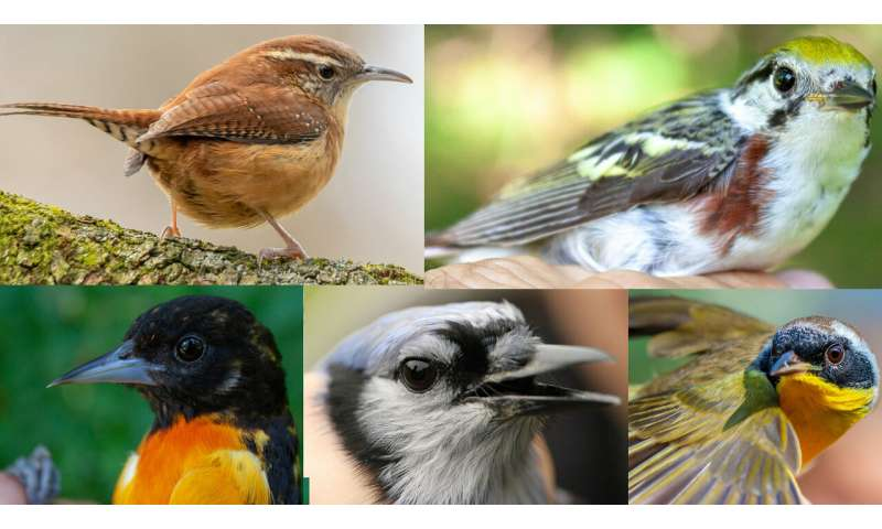 Without habitat management, small land parcels do not protect birds