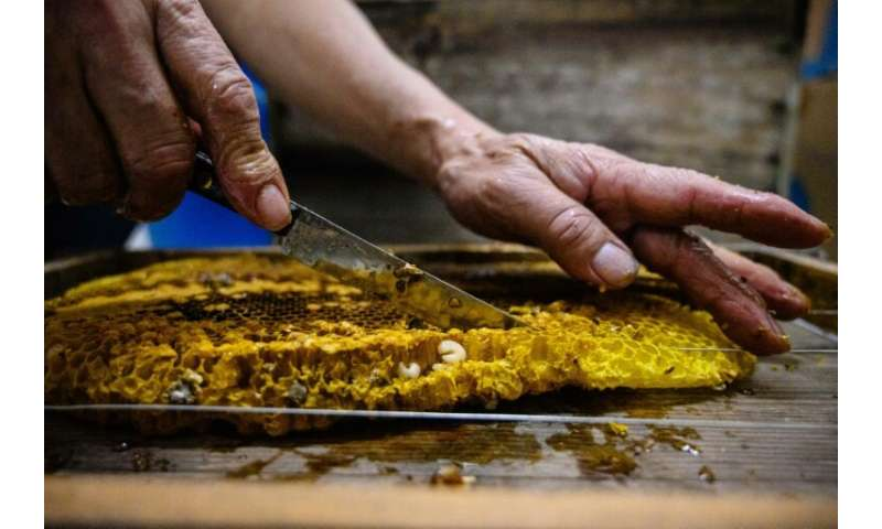 Yip frames a honey comb with bee larvae on it at his apiary in Hong Kong