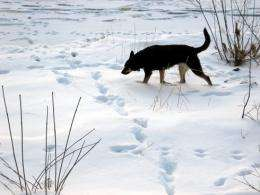 The nose of wildlife detection dogs becoming a valuable research tool