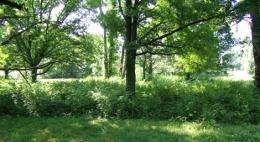 Invasive plants increase the risk of tick-borne disease in suburbs