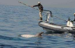 Researchers investigate marine mammal behavior and responses to sound