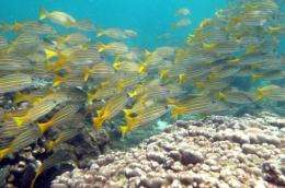 Scientists say corals are vital to marine life