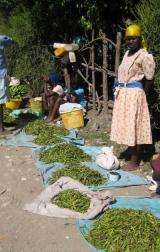 Researchers introducing sustainable agriculture practices to improve food security