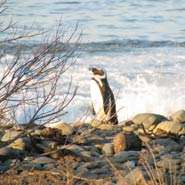 New technology will help to protect South African penguins