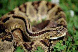 Scientists in Costa Rica raise deadly reptiles to harvest their venom