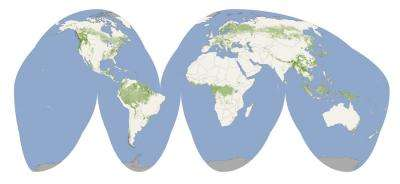 First-of-its-kind map details the height of the globe's forests