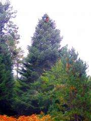 Newman Christmas Trees.Searching For The Perfect Christmas Tree