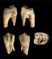 Last Neanderthals died out 37,000 years ago