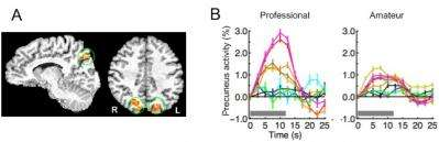 Researchers uncover neural origins of expert intuition