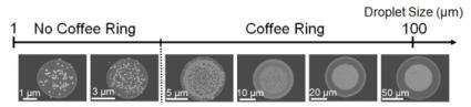 How world's smallest 'coffee ring' may help biosensors detect disease