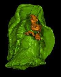 3D model of ancient sea creature