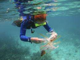 Depth important in generating reef diversity